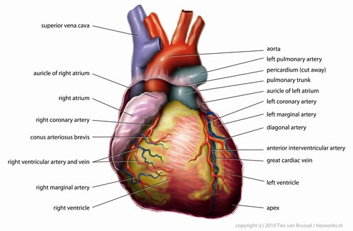 Top 10 tips for a healthy heart there ccuart Choice Image